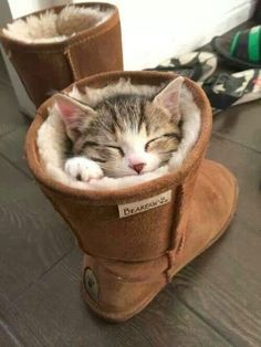 5 Innocent and funny cats
