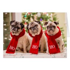 Pug Holiday/Christmas card. Minnie Max and Matti Card - holiday card diy personalize design template cyo cards idea