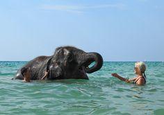 Making friends.  #phuket #elephant #swimming