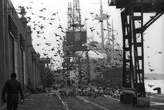Colita, Dias Laborales: Puerto de Barcelona, 1966