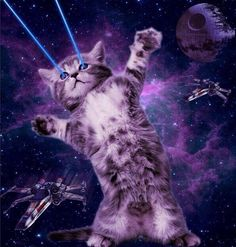 Tagged with cats in space; My daughter recently became fascinated with Space Cats. So we sat down and I showed her how to make one. My first space cat. Crazy Cat Lady, Crazy Cats, I Love Cats, Cool Cats, Galaxy Cat, Psy Art, Owning A Cat, Space Cat, Cat Wallpaper