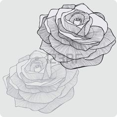 Fleur vintage rose, la main-dessin. Vector illustration.