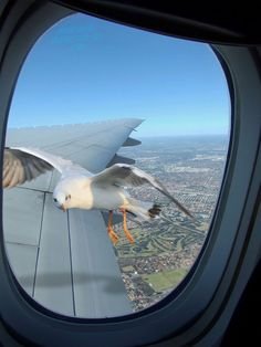 "Sea Gull In Plane Window _ You might be wondering if your pilot is ""Sully"" Sullenberger right about here"