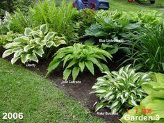 Way to layout hostas - Garden Ideas for blending Hosta