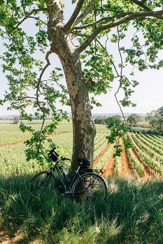 Bike leaning against tree in the French countryside Country Farm, Country Life, Country Living, Country Roads, Beautiful World, Beautiful Places, Magic Places, Country Scenes, French Countryside