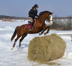I've always seen hay bales in the field and thought they would make excellent jumps!