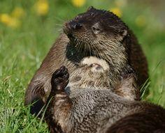 Otter gives her friend a nice, relaxing scalp massage - June 9, 2013