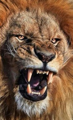 Remember change comes from doing things you do not normally do. Animals And Pets, Funny Animals, Cute Animals, Big Cats, Cool Cats, Lion Photography, Lion Wallpaper, Lion Design, Lion Pictures