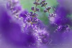 Purple flowers by Hexxxe_6 Photography on 500px #flower #photography #purple