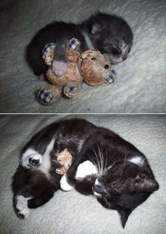 Some people... I mean cats... never change ;)