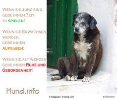Was man Hunden geben sollte! #Hunde