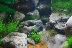 Faux rocks using VivariumWorks epoxy for an axolotl tank
