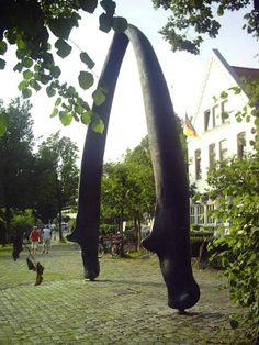 Walkiefer am Utkiek in Bremen-Vegesack im Fruehling
