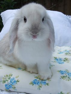 ♥ Love the Floral Sheets (I Have a Duvet In the Exact Pattern) & of course, the Beautiful Fluffy Bunny ♥ -S. Cute Baby Bunnies, Funny Bunnies, Cute Baby Animals, Cute Babies, Funny Animals, Cute Pets, Wild Animals, Hamsters, Fluffy Bunny