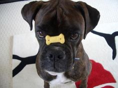 """""""Ummm....you missed my mouth.""""  (boxer)"""