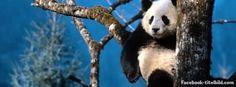 Facebook Titelbild Panda Facebook Timeline Titelbild
