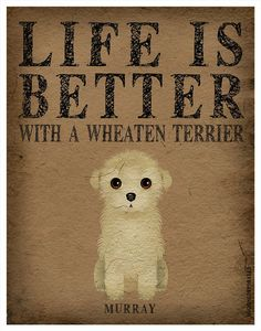 Life is Better with a Wheaten Terrier