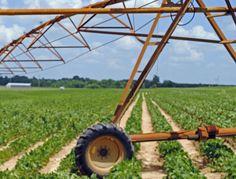 Row crop farming