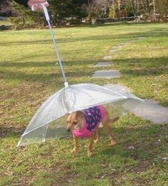 Pin for Later: Celebrate Spring Weather With POPSUGAR Pets' Must Haves Dog Umbrella That's right: here's an umbrella ($35, originally $40) just for your dog. He won't have anything to worry about during a light April shower.
