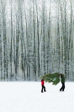 Tree picking!