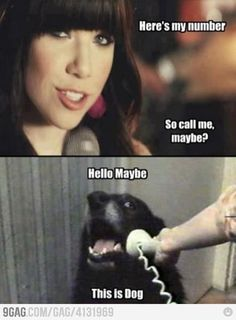 Hello Maybe. This is Dog.