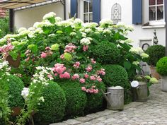 Wonderful combination of boxwood, roses and hydrangea - L A N D L I E B E-Cottage-Garden