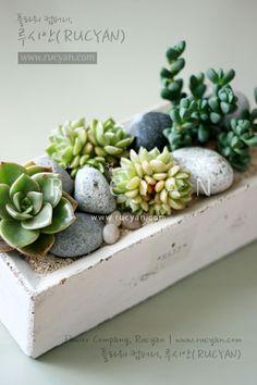 개업선물다육식물 화분_벽어연,백모단_[루시안] :: 네이버 블로그