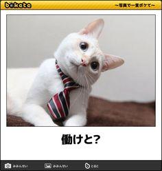 動物ボケて Funny Cat Faces, Funny Cute Cats, Cute Funny Animals, Funny Animal Pictures, Cute Baby Animals, Animals And Pets, Kittens Cutest, Cats And Kittens, Smiling Cat