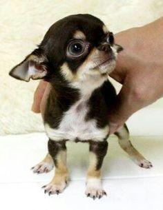 Soooo tiny!!!