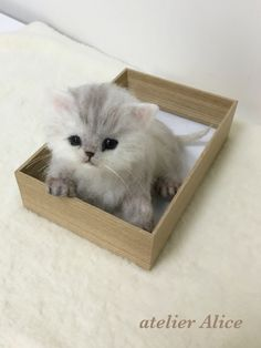 A wool felt cat Chinchilla Persian kitten handmade cat _ This item is up for auction as of 11/4/15.  Three more days if you are interested in bidding.