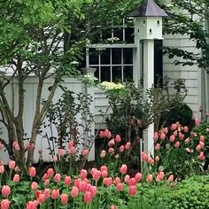 Tiptoe through the tulips....tulip season is my favorite! #tulips #tuliptuesday #pinktulips #gardens