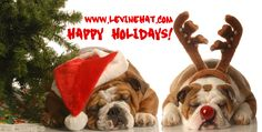 Bulldog Depot Holiday Collection Holiday Spirit Box Set of 10 Bulldog Christmas Cards *** To view further for this item, visit the image link. (This is an affiliate link) Christmas Tree Poster, Christmas Art, Christmas Photos, All Things Christmas, Bulldogs Ingles, Dog Stock Photo, Free Art Prints, Photo Tree, Dog Dresses