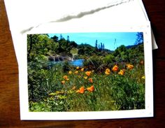 American River POPPIES blank-inside card from PonsArt $6.00 w/a stamp