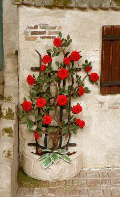 Rose+an+halbrundem+Rankgerüst+net.jpg (980×1600)