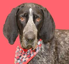 7 / 29 - Petango.com – Meet Lilly, a 2 years Coonhound, Bluetick / Mix available for adoption in WICHITA, KS Address  3313 N Hillside, WICHITA, KS, 67219  Phone  (316) 524-9196  Website  http://www.kshumane.org  Email  mgray@kshumane.org