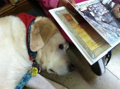 Reading/Therapy dog Atlas steals the show | Lynette Endicott