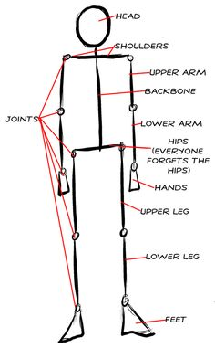 Proportions of the human figure.jpg