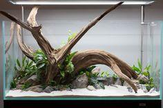 Stunning Driftwood In Open Top Aquarium With Rocks, Live Plants, & Sand Substrate www.driftwoodboss.com #driftwoodboss