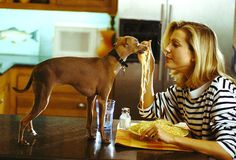 Spaghetti being fed to a tiny dog by a lonely woman