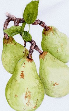 Immagine di http://watercolourswithwow.com/wp-content/uploads/Pears-after-Anna-Mason-2014.jpg.