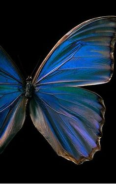 butterflies, blue, summer, pretty, colorful