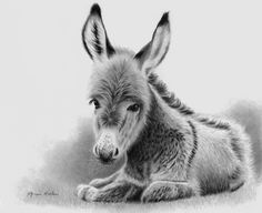 Penelope by Glynnis Miller, Pencil, 9 x 11 Pencil Drawings Of Animals, Horse Drawings, Art Drawings, Beautiful Horses, Animals Beautiful, Donkey Drawing, Farm Animals, Cute Animals, Cute Donkey