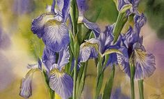 ARTFINDER: Rhapsody in blue by Alfred Ng - original watercolor painting on Arches watercolor paper, Arches Watercolor Paper, Watercolor Flowers, Watercolor Paintings, Flower Paintings, Iris Art, Rhapsody In Blue, Paintings For Sale, Irises, Wall Art