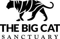 Donate to the Big Cat Sanctuary - Amur Leopard Caracal, Serval, Big Cat Sanctuary Kent, Rusty Spotted Cat, Black Footed Cat, Iberian Lynx, Pallas's Cat, Sand Cat, Clouded Leopard