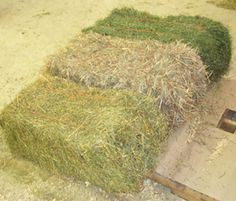 Feeding different cuttings or species of hay
