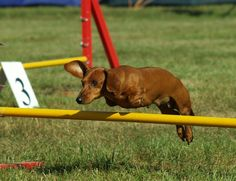 Aw, look at those little legs jump! All you Hunter Jumpers got nothing on me.