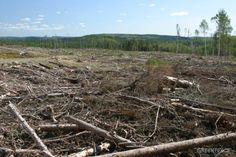 This forest was clear cut to make tissues and toilet paper.  Does it make sense to wipe out our planet's oxygen production system so that we can wipes our butts and noses on it?