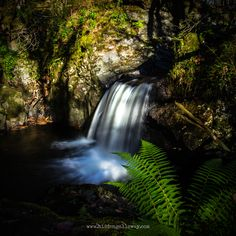 Waterfall and Fern, hidden in Galloway. Scottish Landscape photography by Sharon Halliday