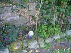 B & B  - Gaestezimmer buchen - deutschsprachig -   moira.eccuill@gmail.com Irish Cottage, Connemara, Plants, Garden, Ireland, Garten, Planters, Gardening, Outdoor