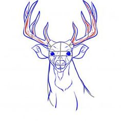 how to draw a realistic deer step 5
